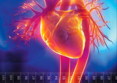 libro de cardiometabolismo